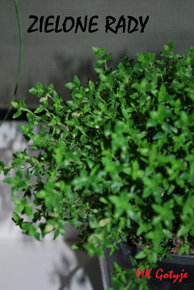 zielone-rady